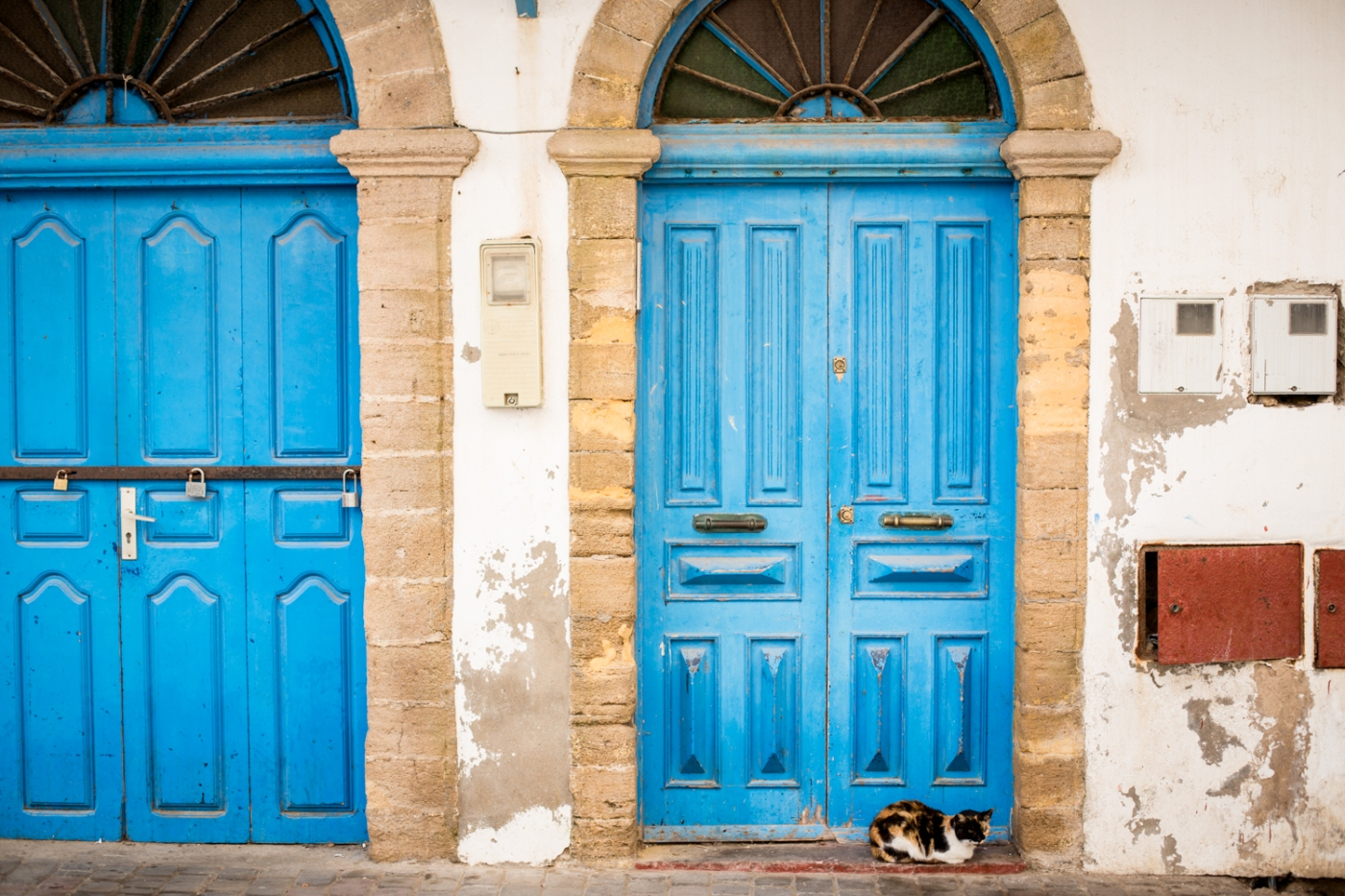 Essaouira - portes bleues chat